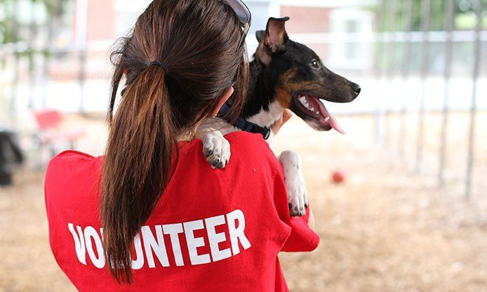 volunteer-spca